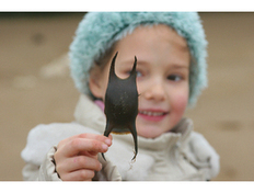 The Shark Trust: Great Eggcase Hunt