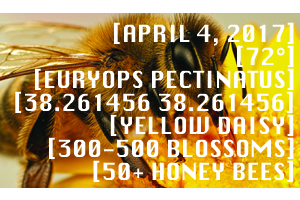 BeeWise Honey Bee Pollen & Nectar Map