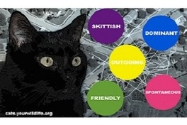 Cat Tracker- Personality Study