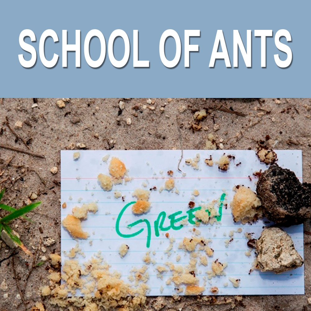 School of Ants USA
