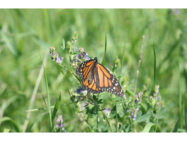 Monarch SOS