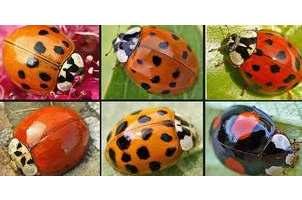 Spot A Ladybug
