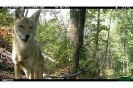 North Carolina's Candid Critters